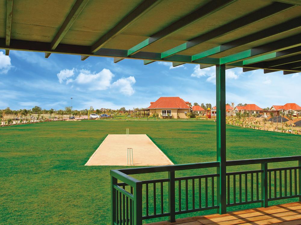cricket-pitch